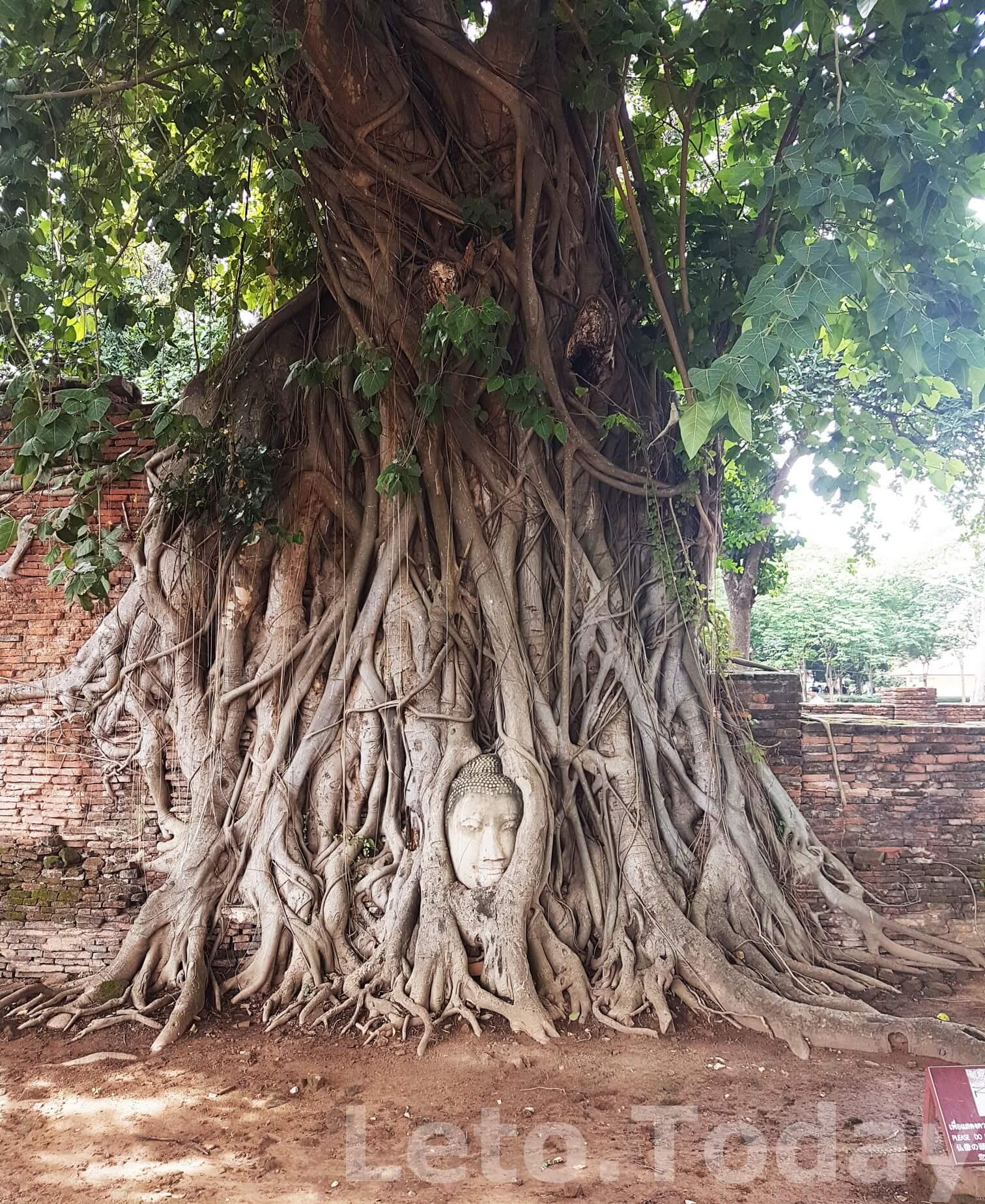 Аюттхая Голова Храм Wat Phra Mahathat