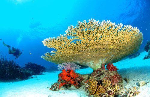 korallovye-rify-surin