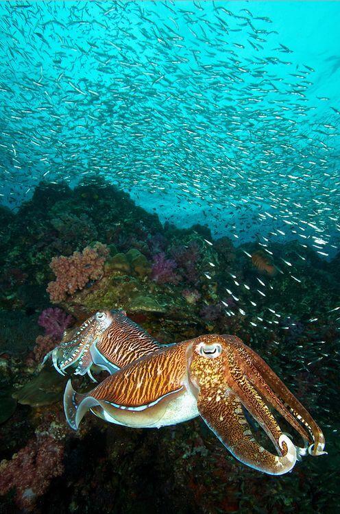 surinskie-ostrova-tajland