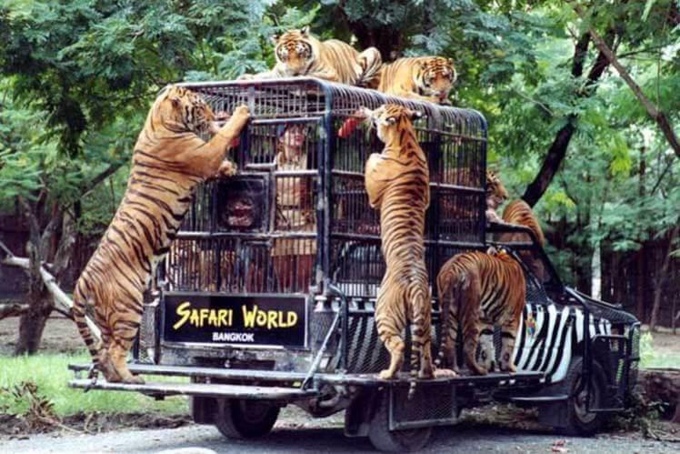 safari-park бангкок