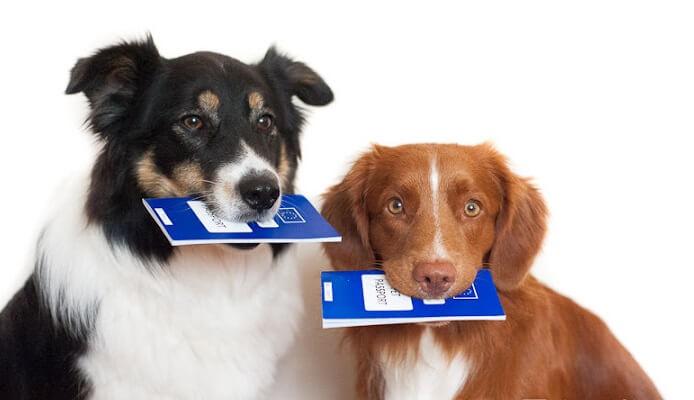 в таиланд с собакой